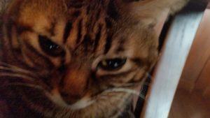 スロットを休み猫カフェへ